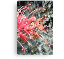 Honey Canvas Print