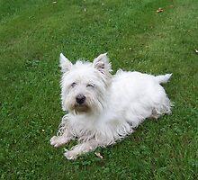 My dog crumb-11 by trainmaniac