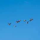 A Squadron of Pelicans by AlyssaSbisa