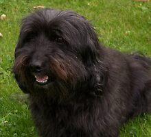My Dog Bobby by trainmaniac