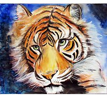 Tiger-eyes Photographic Print