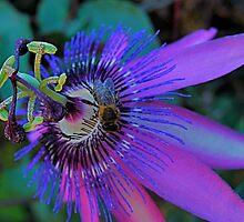 Ultra Violet by marc melander