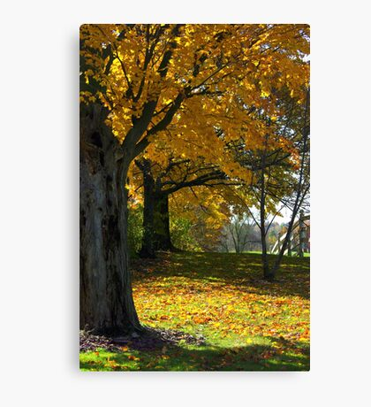 A White Fence Canvas Print