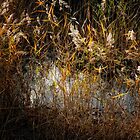 Dunwich Heath Reed Pond by Simon Duckworth