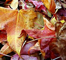 Colors of Autumn by Tracy DeVore