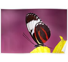 Butterfly - Tucson Botanic Gardens Poster