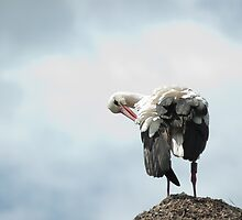 Lady stork fixing her dress by steppeland