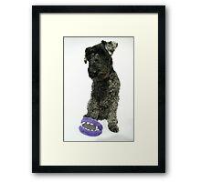 Kerry blue terrier Framed Print