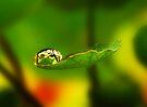 Nasturtium Bubbleland by Ingrid Beddoes