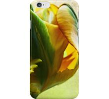 Tulip time iPhone Case/Skin