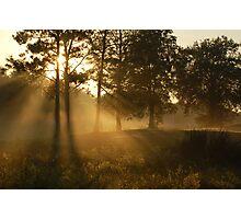Smoky Meadow Woods Photographic Print