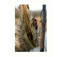 Insect on Milkweed Art Print