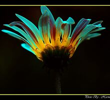 Glowing Beauty by Harmeet Singh