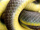 Yellow-belly Coil by Carla Wick/Jandelle Petters