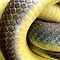 Patterns on Reptiles