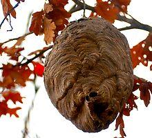 Hornets Nest by Jarede Schmetterer
