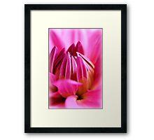 Dahlia  Framed Print