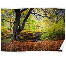 Autumn Beech Wood Poster