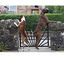Guard Dogs Photographic Print