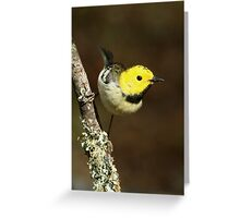 Warbler, Hermit Greeting Card