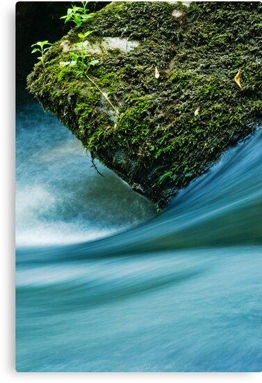 The Rock by Milos Markovic