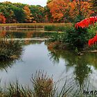 """a red autumn in the wetlands"" by Rex  Montalban"