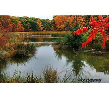 """""""a red autumn in the wetlands"""" Photographic Print"""