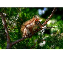 Baby Red Squirrel Photographic Print