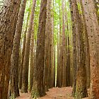 Otway National Park by Puggs
