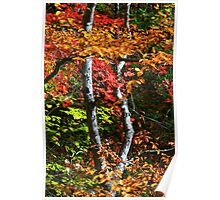 MAPLE TREE AND BEECH Poster