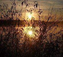 Shine by heathernicole00