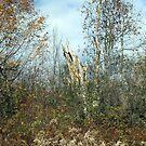 Dead Wood by gailrush