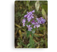 Simply Violet Canvas Print