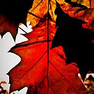 Autumn Leaves by Carlos Restrepo