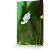 lonely flower in the rainforest Greeting Card