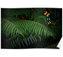 Rainforest with butterflies Poster