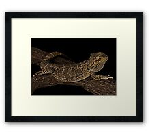Chilled out water dragon Framed Print