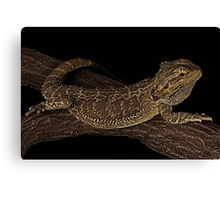 Chilled out water dragon Canvas Print