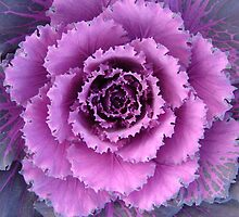 Fractal Geometry of a Cabbage Flower  by clizzio