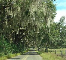 Rural Ocala/Oak Trees and Spanish Moss by AuntDot