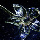 Glass Flower by Len Bomba