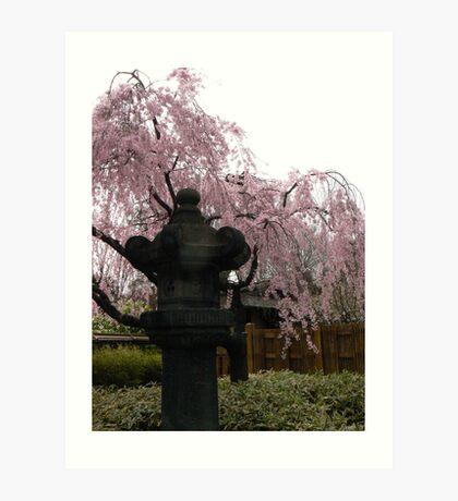 Cherry tree and Japanese lantern Art Print