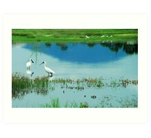 Royal Spoonbills with Mount Roundback Reflection Art Print