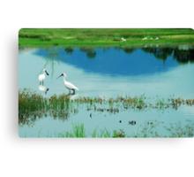 Royal Spoonbills with Mount Roundback Reflection Canvas Print