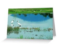 Royal Spoonbills with Mount Roundback Reflection Greeting Card