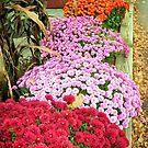 Beautiful Flowers by Esperanza Gallego