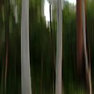Forest of the Eucalypts by Kitsmumma