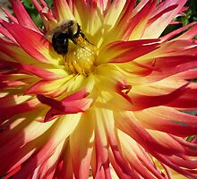 Orange and Red Dahlia with Bee by MischaC
