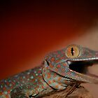 Tokay Gecko by smalshbarrick