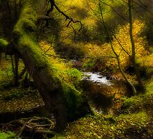 Autumn - Orton Style by David Lewins